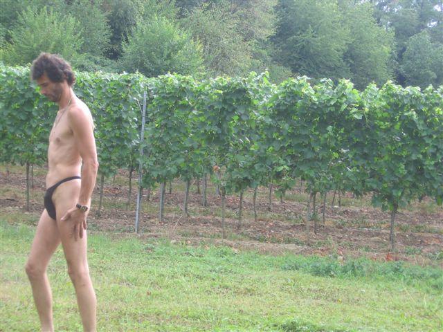 bikinimode Weinberge
